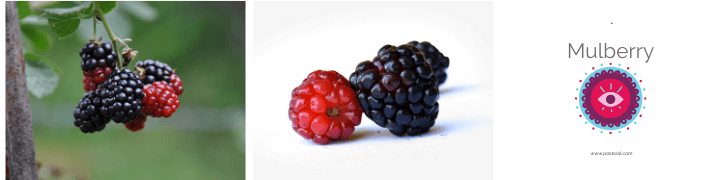 Fruits To Grow In A Garden - Mulberry