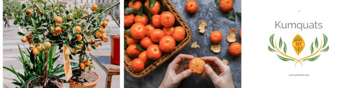 Fruits To Grow In A Garden - Kumquats