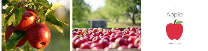 Fruits To Grow In A Garden - Apple
